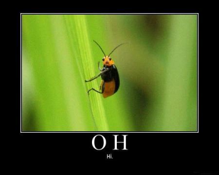Oh!, hi!